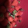 苺食べたら口の中痛い