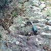 佐久の地質調査物語(鍵掛沢断層の存在)
