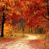 秋のポスターを作成してみました