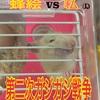 【part.2】ハムスターのケージカジカジをやめさせたい!!