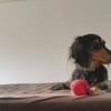 意外なモノがおもちゃに!【愛犬との室内での遊び方】宝探しゲームって?