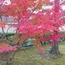 相国寺さんは秋の色