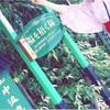 【山中温泉】街歩きが楽しい!お店が充実している、情緒あふれる温泉街