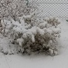 【うさぎ】まるの葉大根に雪が積もった!