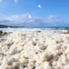 今年も曽々木海岸で波の花が発生しました(。・Д・。)
