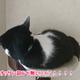 今日の黒猫モモ&白黒猫ナナの動画ー815