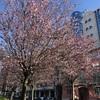 もうすぐ春?