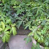 冬の準備と苔盆栽