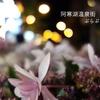 道東花畑めぐり旅*3