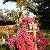 東南植物楽園【夫婦旅行】水中楽園のイルミネーションを観る!