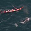 マカ族の捕鯨/フェロー諸島での捕鯨妨害/クジラの持続的利用へ改正法成立/伊豆の漁の模様/太地沖の鯨類の追込み網漁、今季通算16日目の成功/千葉の映画「海くんとクジラ」報道/反捕鯨とは人権軽視