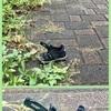 👡 不可解な靴【その1】〜回文で要説