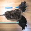 おたふく風邪で家族に、掃除で羽箒(ほうき)に、助けられています。