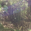 【1畳分の森づくりプロジェクト】〜森の木の再生エネルギーの偉大さ〜