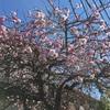 春が来た実感と焼きしゃぶ。