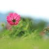 上堰潟公園で花を愛でる