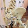 骨の歪みを戻すと筋肉のハリもすっきり。
