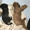 シンクロで寝てるくーちゃんと大ちゃん、おまけの福ちゃんとあぶれた豆助 9月20日