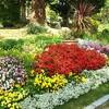 春の花がいっぱいの福岡市植物園