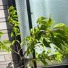 現在の桜たち^ ^