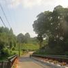 素敵な植物園「その1」夏の景色