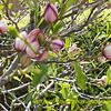庭木の花と鳥の声