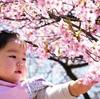 穏やかに春を感じる