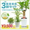 空気清浄機代わりに観葉植物を置くのはどうだろう