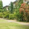 ブラシの木の花 昼休みの庭 クラブ活動