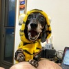 カインズの犬服とバジル