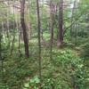 ノルウェイの森と軽井沢