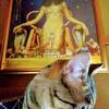 【猫と猫の相性1】多頭にむいてる猫タイプとか年齢とか。