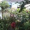 桂造園の剪定作業