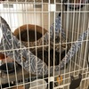 保護猫 Coteru 36日目 - カバーを外すとお食事事情
