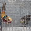 和歌山城公園動物園にはどんな動物がいるの?和歌山城の楽しみ方