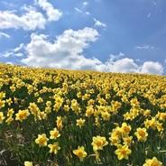 半分黄色で半分は青空、5月の滋賀県 南比良を縦走。