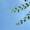 しなやかな緑の若枝