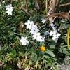 日記 ~ジョギング・春の花・晩酌~