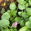 開花まであと少し!&肥料の使い分けについて^ ^