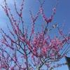 サンアントニオにも花が咲いていました