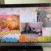 アンジー親子、一瞬TVに映る。