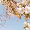 あっという間に開花する桜。花開く日は必ずくる。