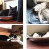 【猫のブラッシング】【四猫 多頭飼い】