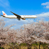 着陸してくる飛行機とサクラを撮る!成田・さくらの山公園で撮ってきた【2018.4.1】