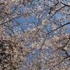 春ですね\(^o^)/