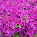 仙台市内某所の花々(2020年5月その2)