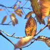 2018年12月7日までに撮影したデジカメ写真。紅葉が綺麗。大鷭(オオバン)が飛来して冬の到来です