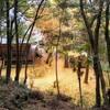 【旅ラン 栃木県益子市】 高舘山と西明寺周辺を里山ラン!紅葉と巨樹が織りなすパワースポットだった!