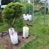 菜園だより ④ 苗の定植