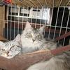 我が家で暮らす仲良しの猫の物語
